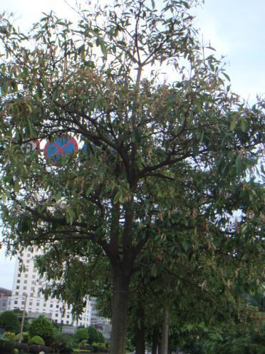 树木百科图片及名称