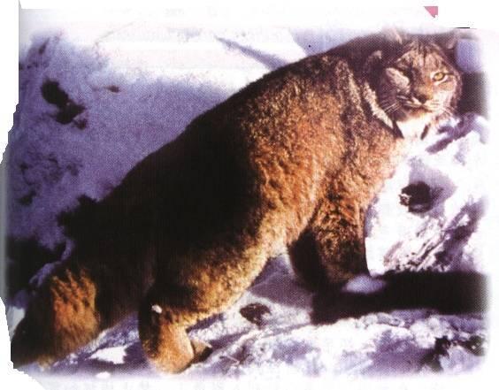 各种动物尾巴的作用背景图
