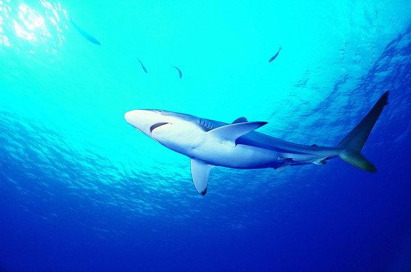 海洋大型动物认识的转变