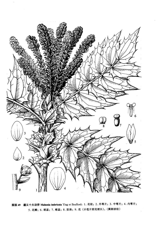 胚珠手绘结构图