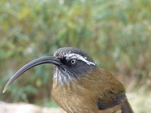 壁纸 动物 鸟 鸟类 雀 500_375