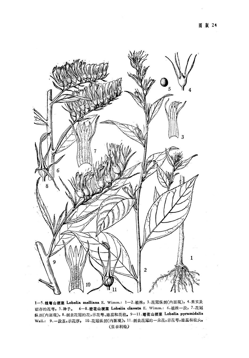 简笔画 手绘 线稿 1057_1519 竖版 竖屏