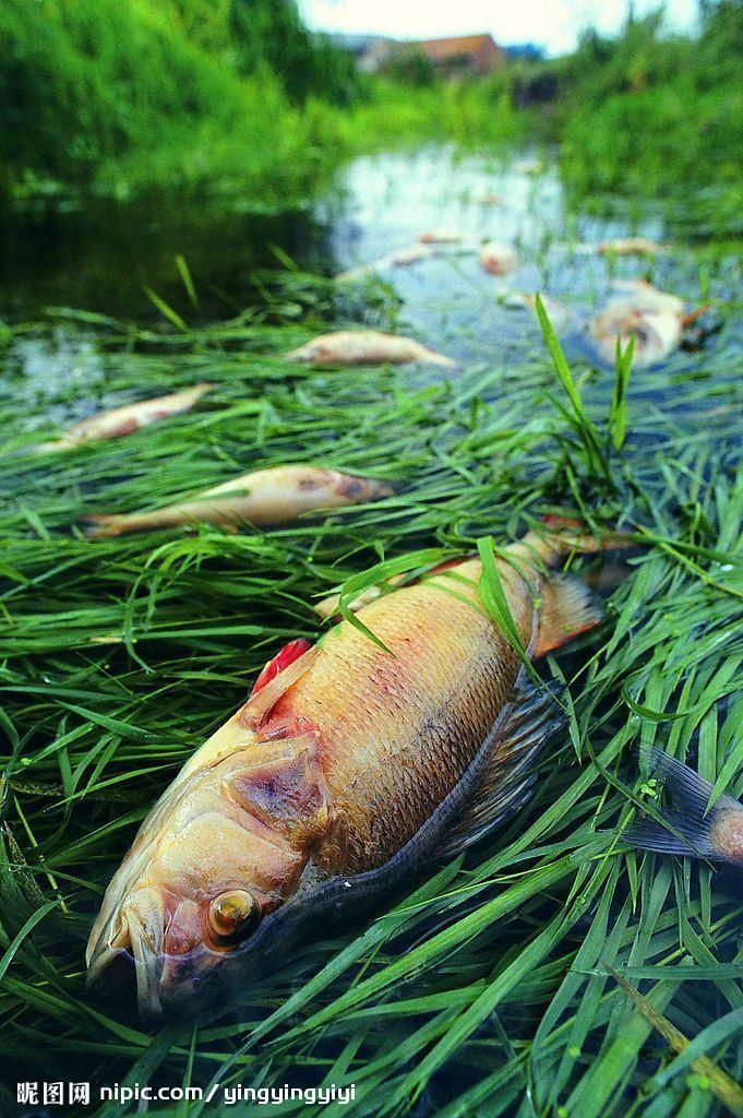 (图)食物链污染