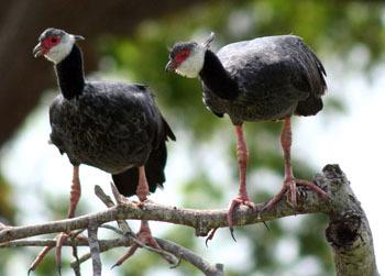 新热带界是爬行动物种类最多的地区之