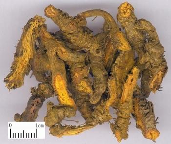 三黄片中盐酸小檗碱液相谱图_中药黄连为什么能降火