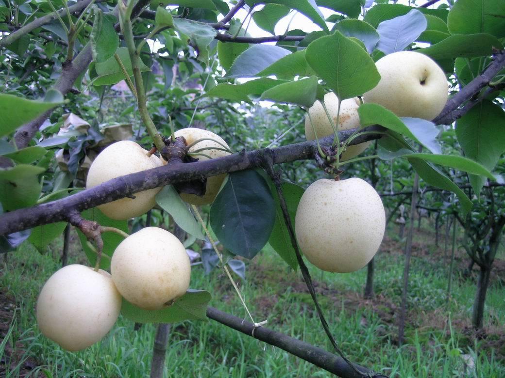 红薯高产栽培管理技术 - 道客巴巴
