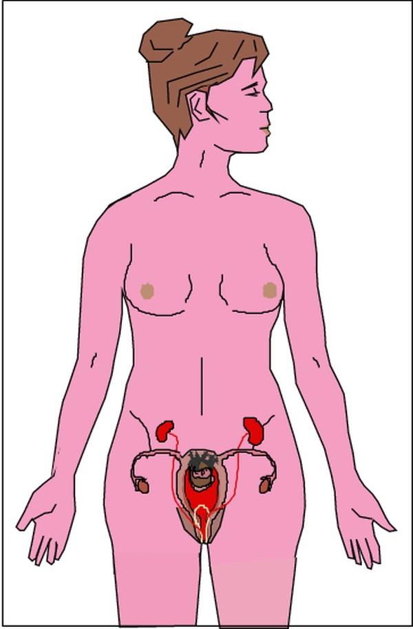 螃蟹怎么去内脏图解