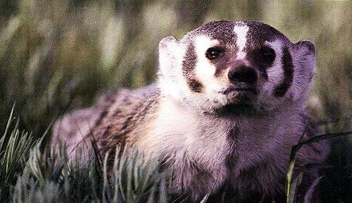 小动物爬树的图片