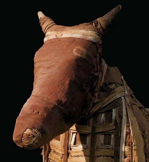 豺以及羊等动物都在古埃及人