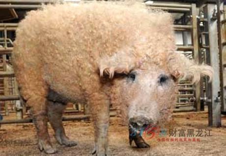 彩泥手工制作大全 动物绵羊