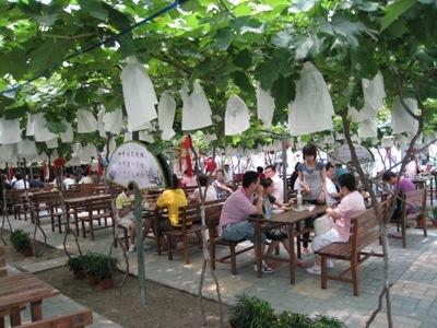 马陆葡萄主题公园位于上海市嘉定区马陆镇