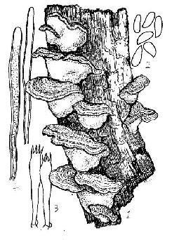 简笔画 手绘 素描 线稿 255_342 竖版 竖屏