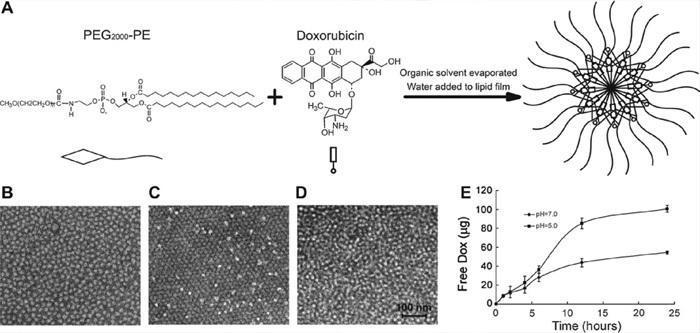 peg化脂质体阿霉素