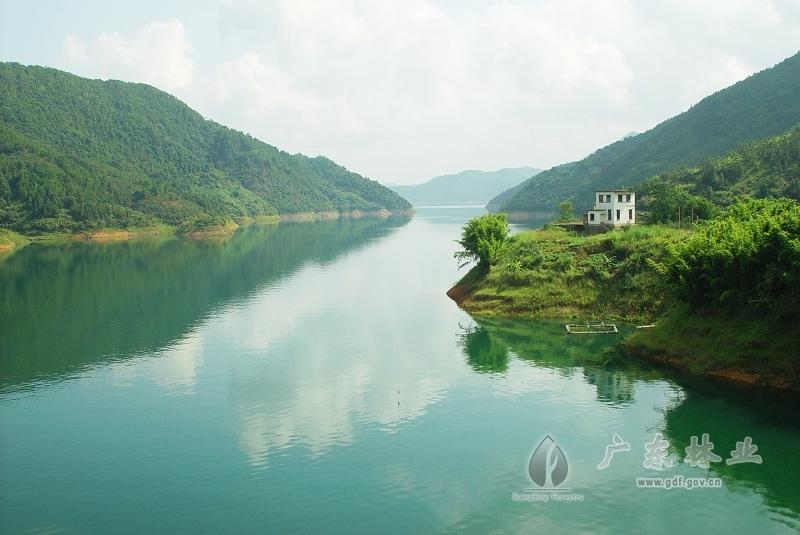 龙川枫树坝保护区