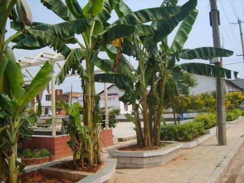 白石江街道风景