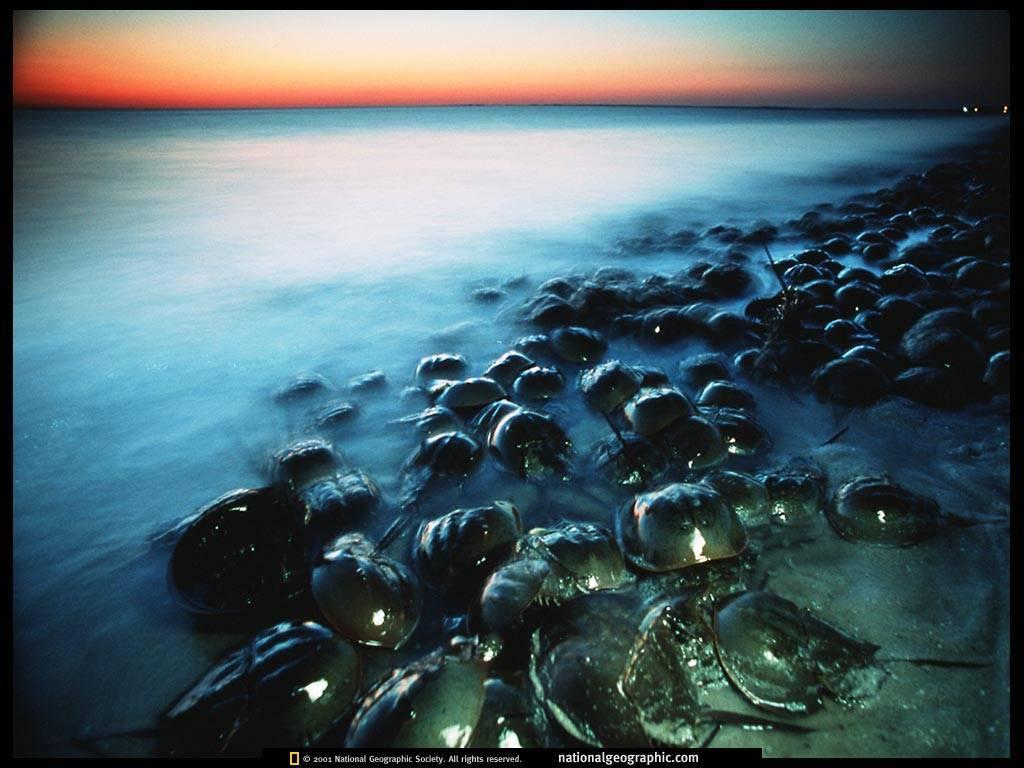 海底鸳鸯为暖水性的底栖节肢动物