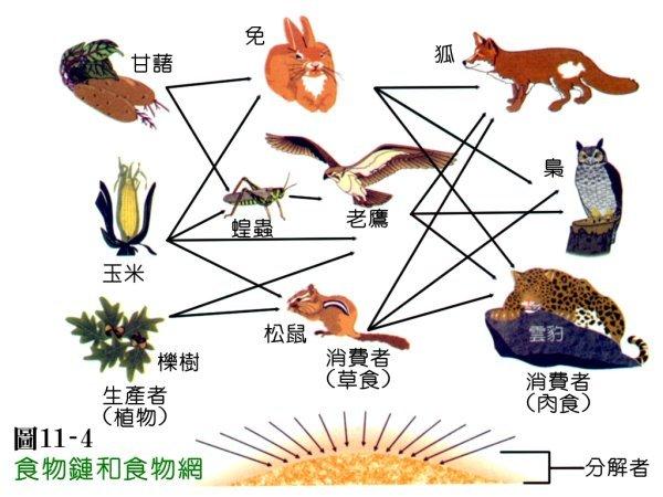 (图)食物链