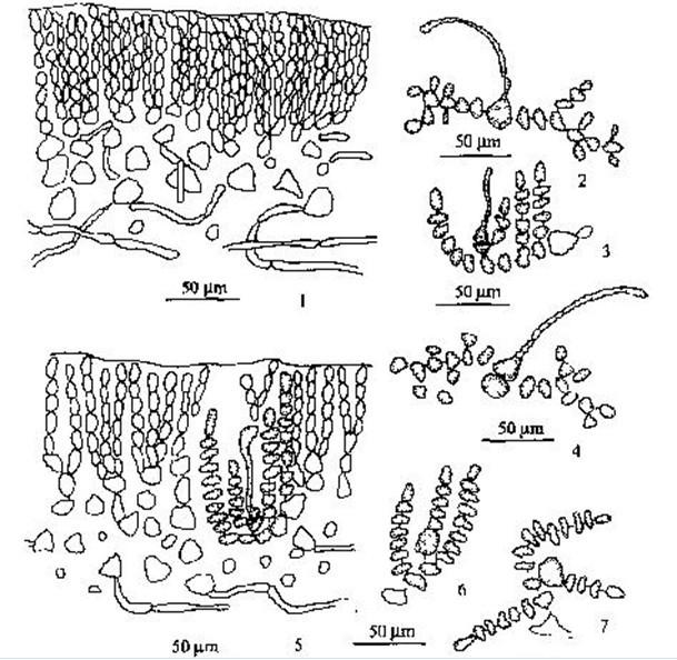 白细胞动漫手绘图