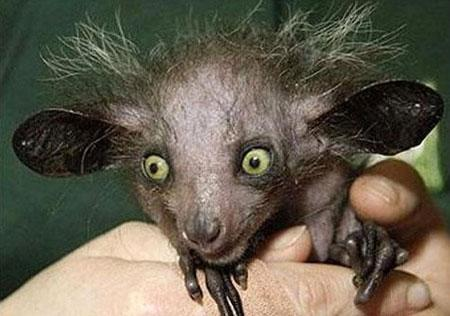 世界上最丑的动物