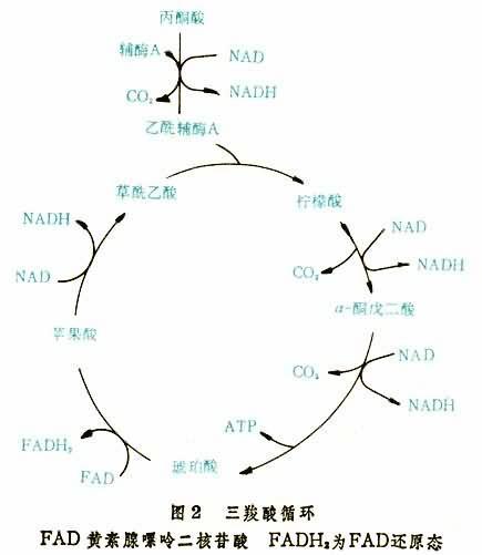 生物膜分子结构模型